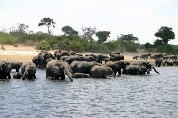 Remember the 330 Dead Elephants in Botswana? Toxic Algae Is the Answer