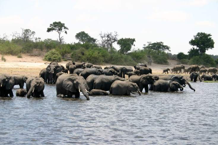 Remember the 330 Dead Elephants in Botswana? Toxic Algae Is the Answer