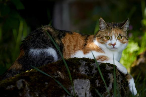 Psychologists Say that Slow Blink Can Make Cats Like You More