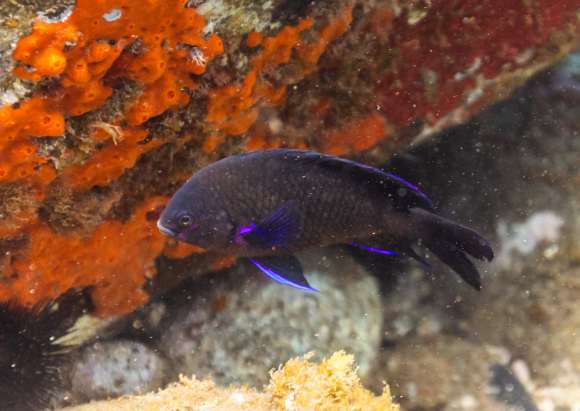 fish in reef cabo pulmo