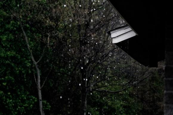 forest plant rain