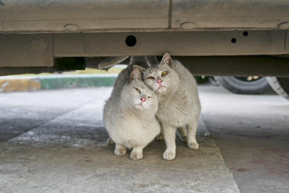 the 2013 study shows that unowned cats (stray or feral) are the number one culprit of wildlife mortality