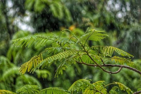 rain panic plant