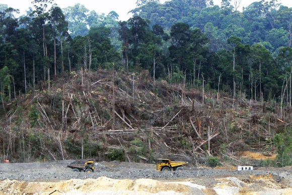Deforestation_in_Borneo (Wikimedia Commons)