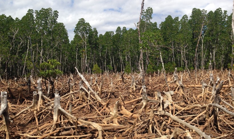 Here Are Four Bad Things Deforestation Can Cause Directly