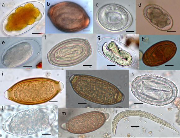 Parasitic microorganisms (Wikimedia Commons)