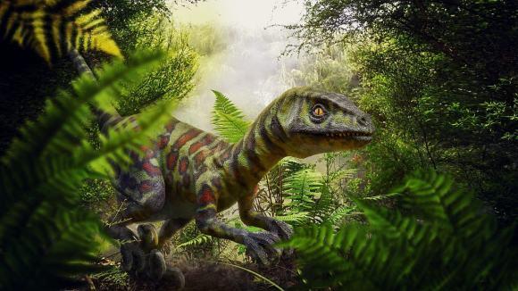 dinosaur ferns