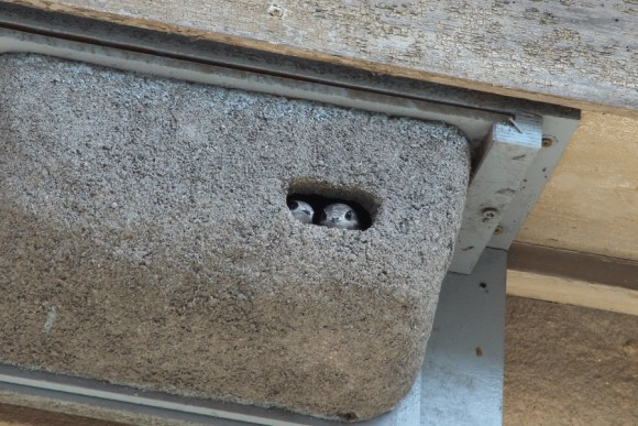 man-made common swift nest (Wikimedia Commons)