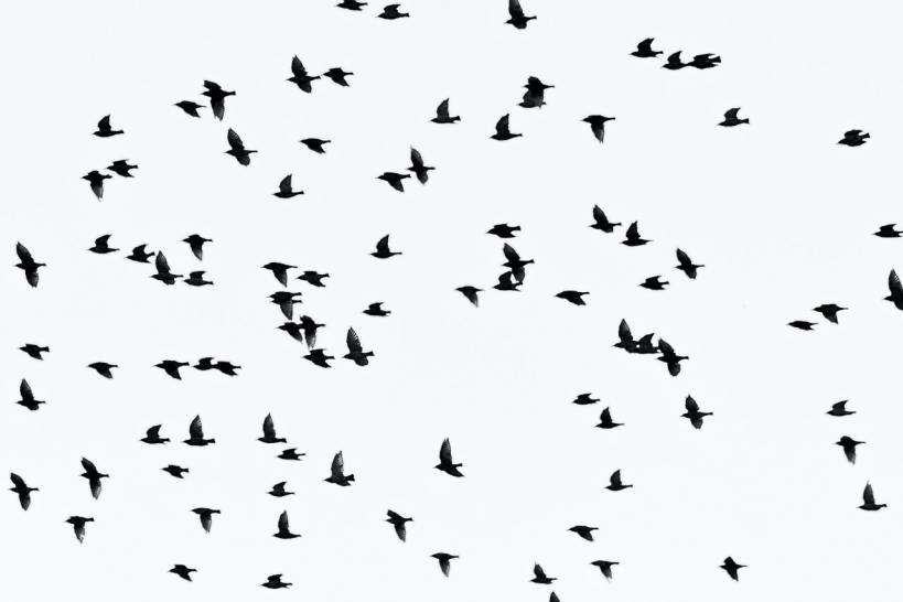 Bird Reproduction No Longer the Same Due to Noise and Light Pollution