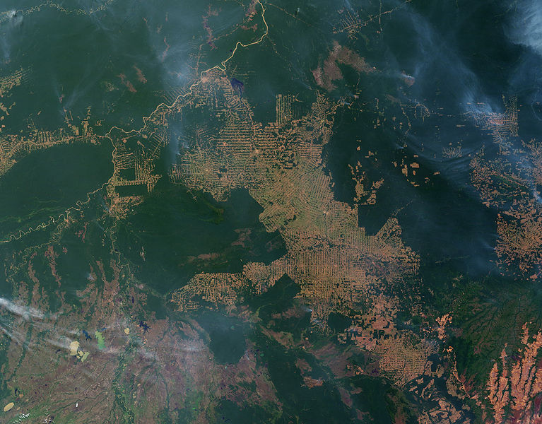 Fires and deforestation in Amazon in 2007