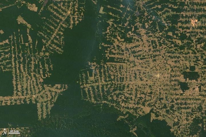 Amazon deforestation in 2010