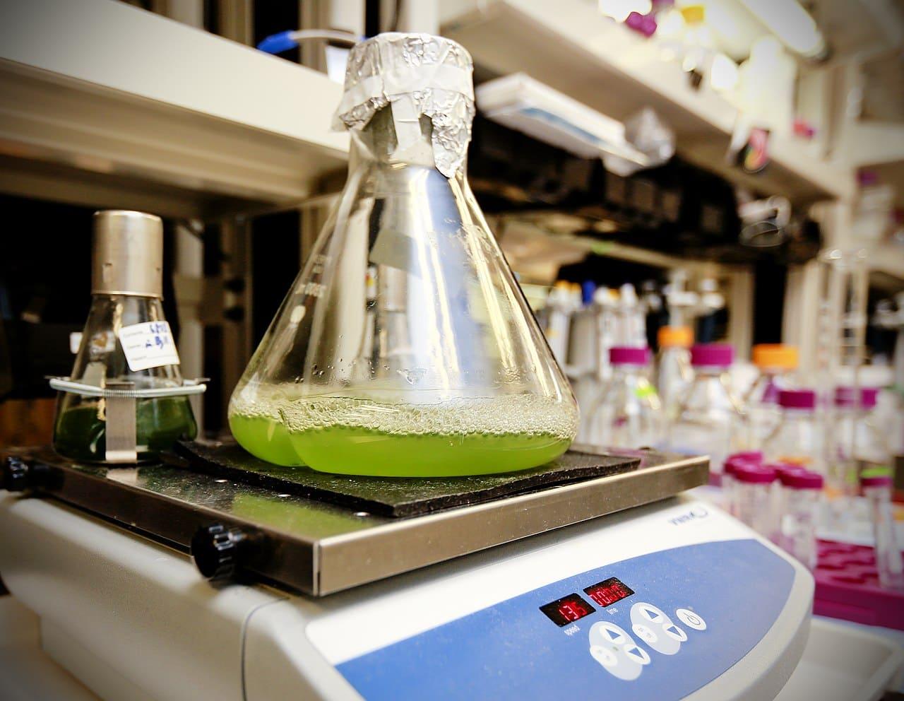 turning algae for biofel