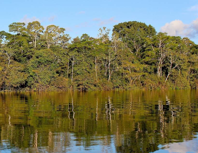 Public-Private Initiative Has Decreased Amazon Deforestation