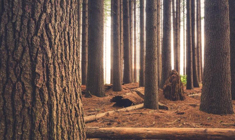 Scientists Turn Sugars Found in Wood into Natural Polymer