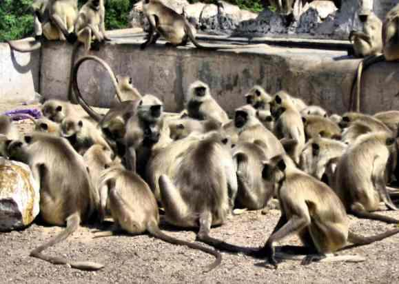 monkeys group