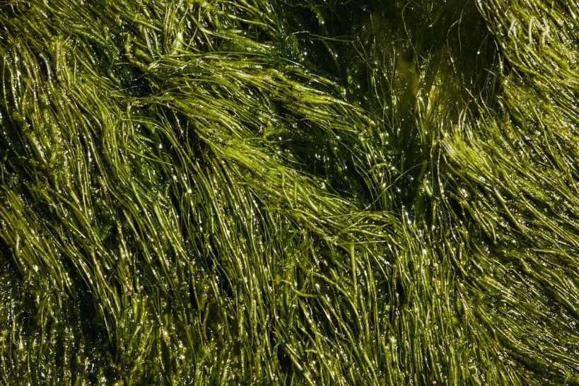 Dearest Algae: We Could Wear Algae Clothes in the Future
