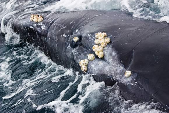 Whale by Ken-Ichi Ueda