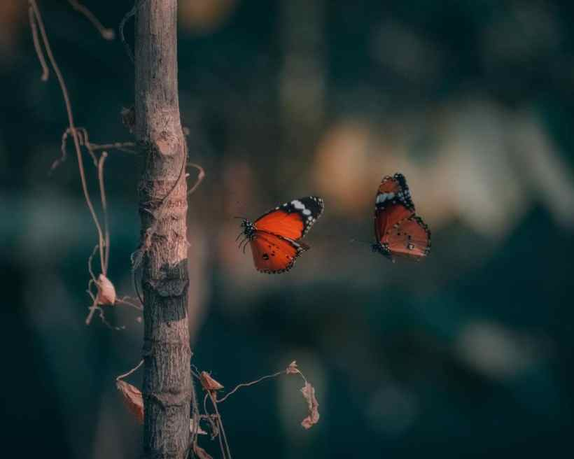Rapid Climate Change Makes It Hard for Butterflies and Moths to Adjust