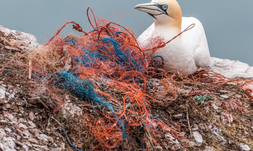 New Study Suggests Plastic Waste Doesn't End Up in the Open Ocean