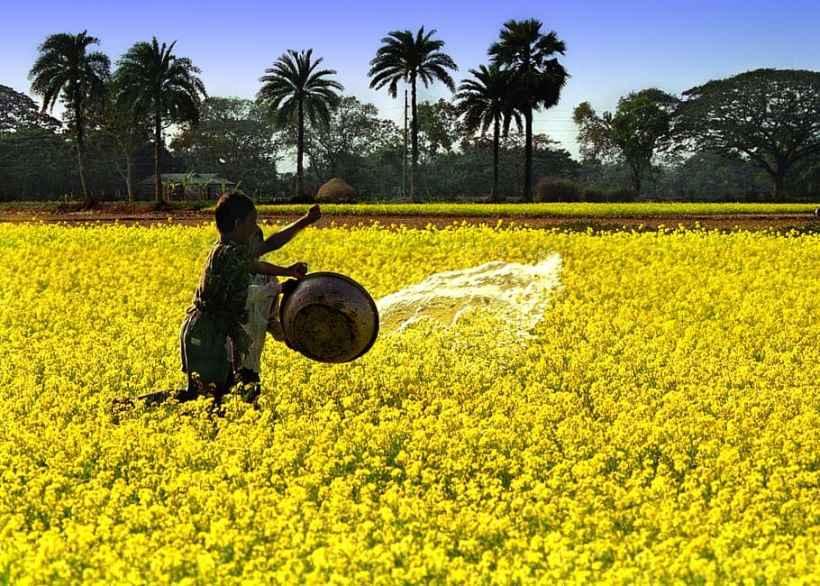 See How Bangladesh Farmer Save Their Farmlands from Flood