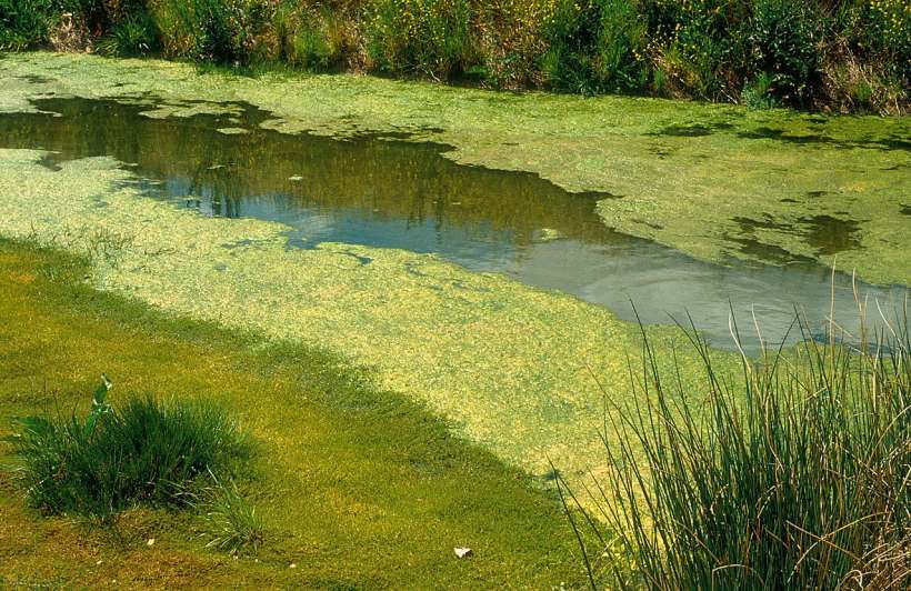 Phosphate Pollution is A Problem, but Now We can Remove and Reuse It