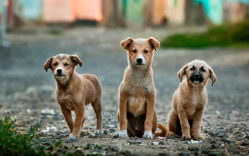 Stray Dogs CanInFact Understand Human Signals, A New Study Finds